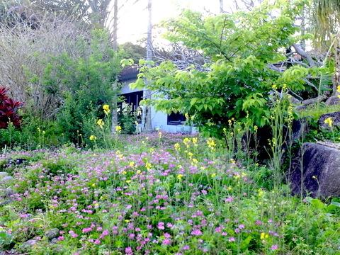 20200324ノマドの庭.jpg