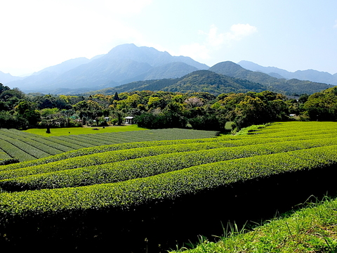 20210314茶畑と山.JPG